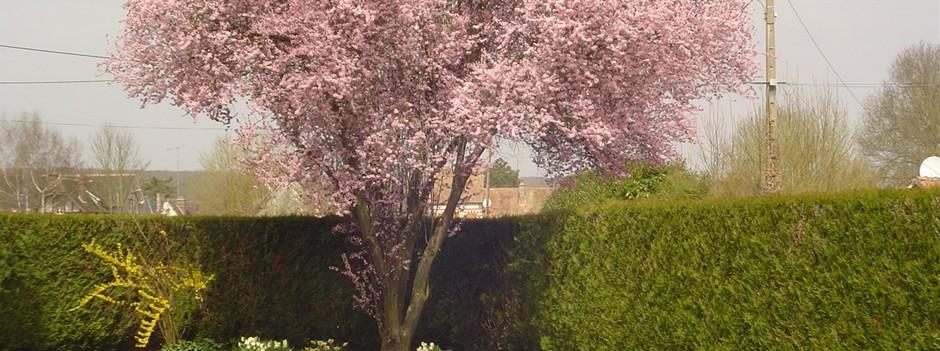 Entretien de jardin jp charron entreprise paysagiste for Entretien jardin eure et loir